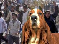 basset hound rally
