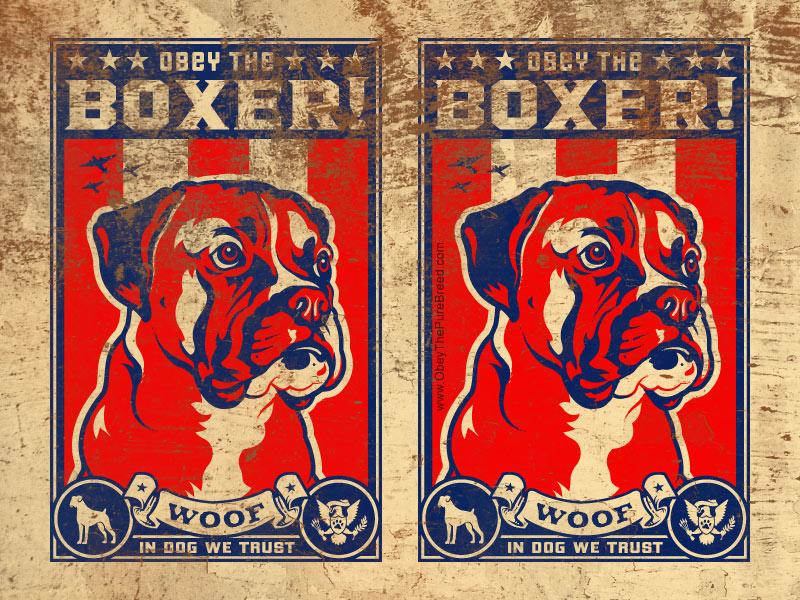tartimasgo boxer dog wallpaper
