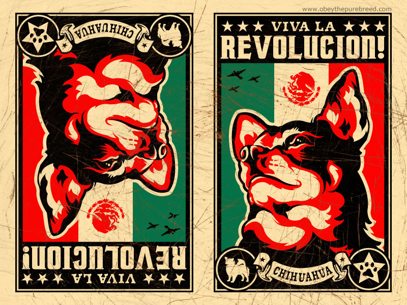chihuahua wallpaper. Chihuahua Revolution wallpaper
