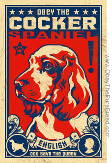 http://www.obeythepurebreed.com/images/english_cocker_spaniel.jpg