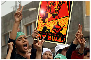 pit bull rally