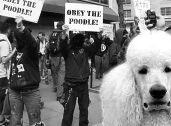 poodle protest