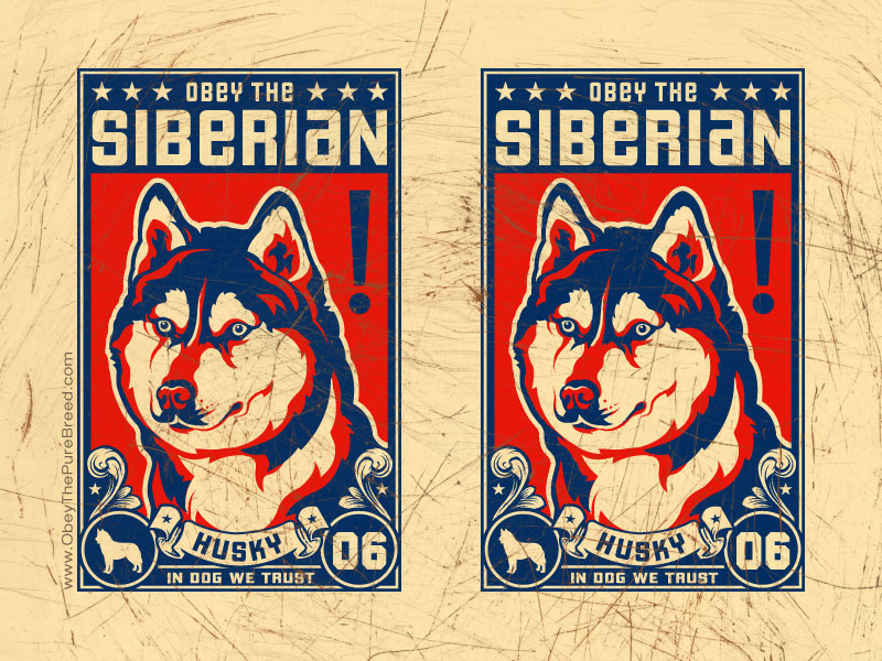 siberian husky dog art