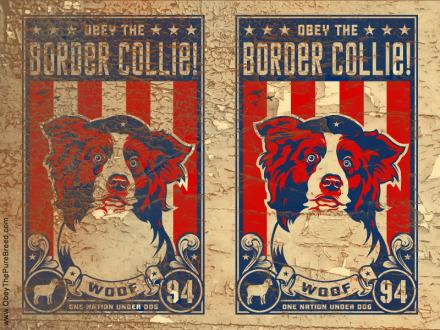 border collie wallpaper