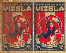 obey the vizsla dog wallpaper