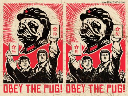 pug dog wallpaper