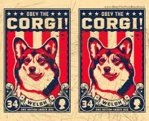 welsh corgi wallpaper